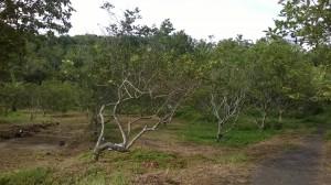mangunan