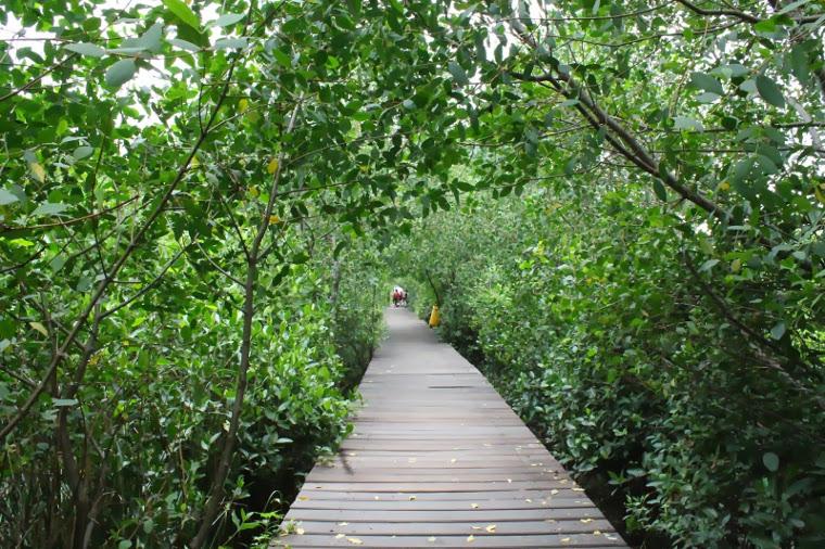 hutan-mangrove-wonorejo