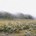 4 Tempat Seru di Sekitar Gunung Gede