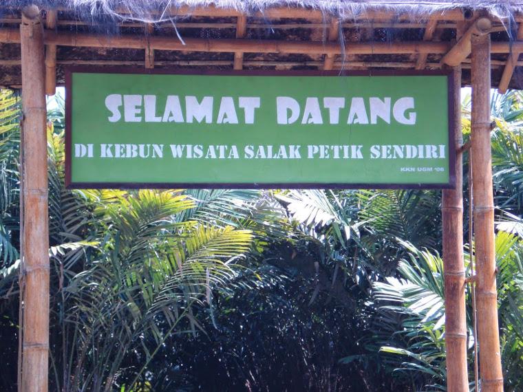 Agrowisata Turi, Jogja. Petik Salak Pondoh Langsung Dari Pohonnya