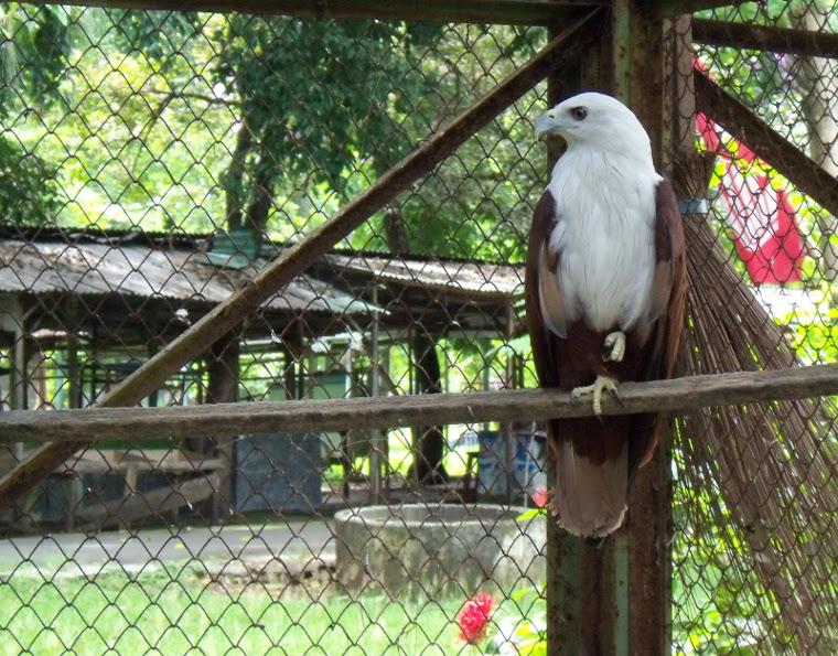 jurug-burung