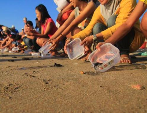 Pantai Samas. Tempat Pelestarian Penyu di Jogja