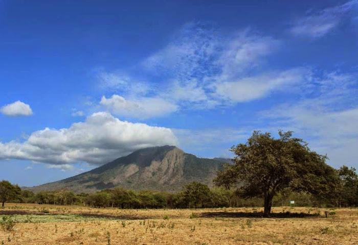 Savana Bekol. Miniatur Afrika di Jawa Timur