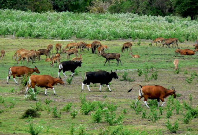 Savana Sadengan, Afrika Lain di Jawa Timur