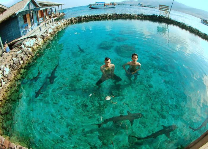 Berenang_bersama_ikan_hiu