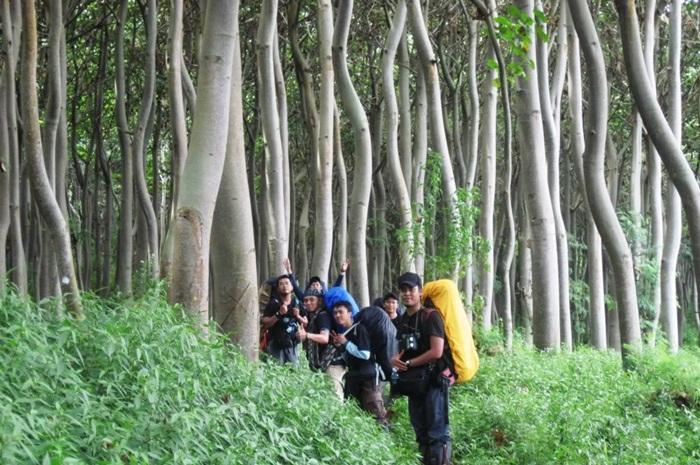 hutan balsa