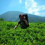 Pendakian Gunung Butak via Sirah Kencong