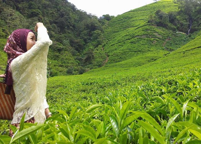 9 Kebun Teh di Indonesia Yang Akan Membuat Matamu Jadi ...