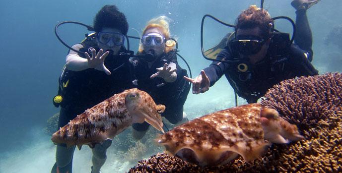 bawah laut menjangan