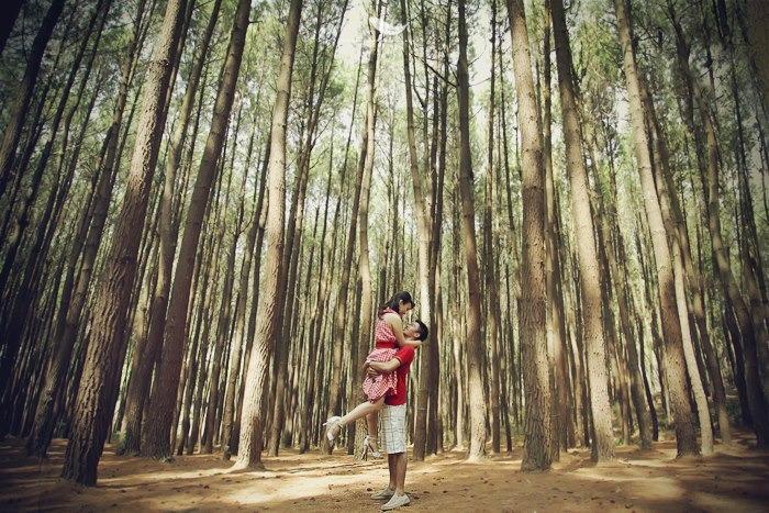 hutan-pinus-imogiri