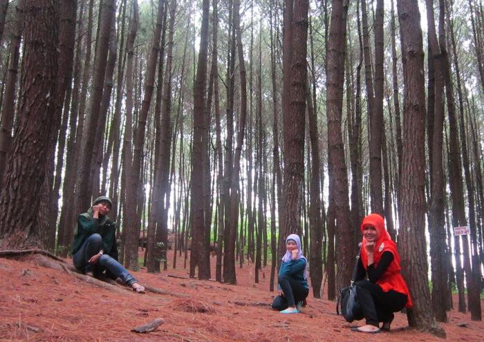 Hutan Pinus Imogiri. Tempat Paling Instagramable di Bantul