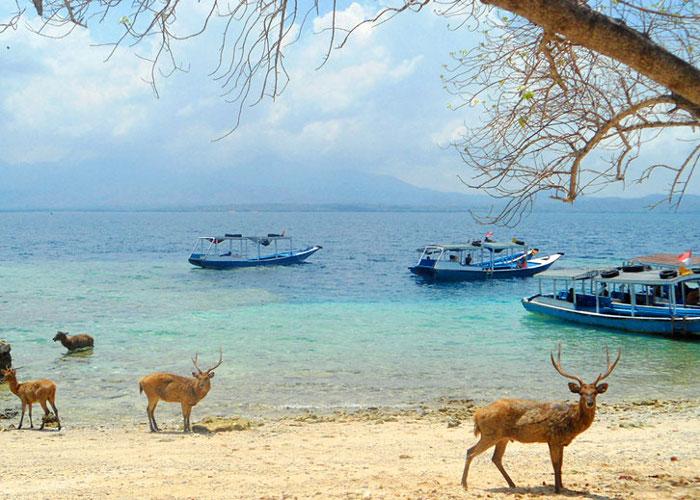 Pulau Menjangan. Pulau Super Cantik di Barat Laut Bali