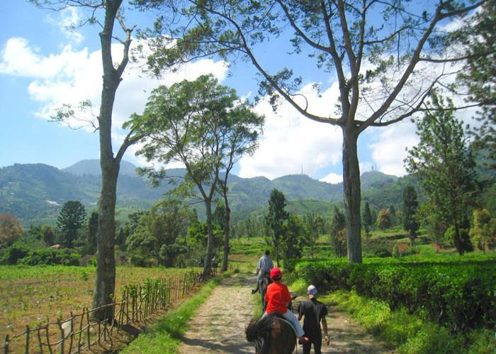 Agrowisata Gunung Mas Bogor