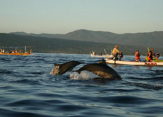 Pantai Lovina. Tempat Terbaik di Bali Untuk Melihat Lumba-lumba di Habibat Aslinya