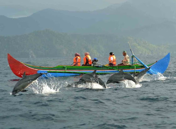4 Tempat di Indonesia Dimana Kamu Bisa Menyaksikan Lumba-lumba Bermain Dengan Ceria di Habitatnya
