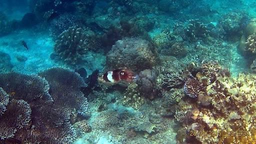 Bawah Laut Pantai Tanjung Karang (Source: amithahirsch.wordpress.com)