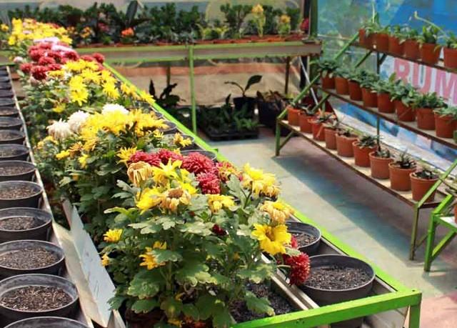 Foto: http://www.pergiberwisata.com/images/Bukit%20Flora.jpg