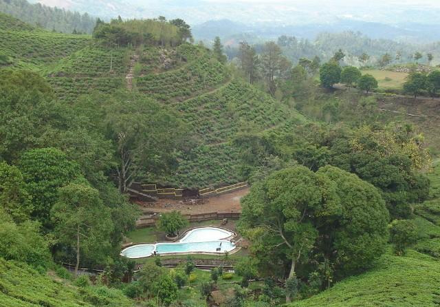 Foto: http://kampoengngawi.com/images/news/jamus/kebun-teh-jamus-4.jpg