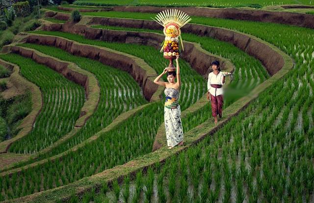 Foto: http://plesiryuk.com/wp-content/uploads/2015/08/Sawah-Jatiluwih-Tabanan-Bali2.jpg
