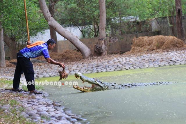 Foto: http://www.kotasubang.com/2081/mengenal-baron-dan-jack-dua-raksasa-blanakan-subang