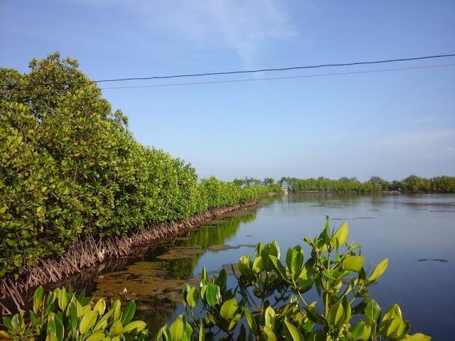 Foto: http://penulissitubondo.blogspot.co.id/2016/01/wisata-tambak-hutan-bakau-dan-pantai.html