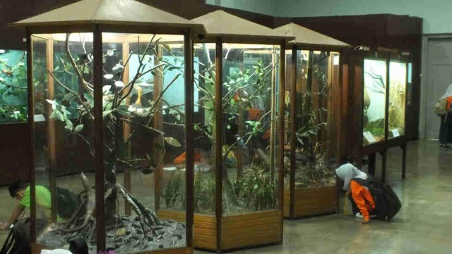 Foto: http://lovelybogor.com/museum-zoologi-sejarah-si-kantor-bulao/