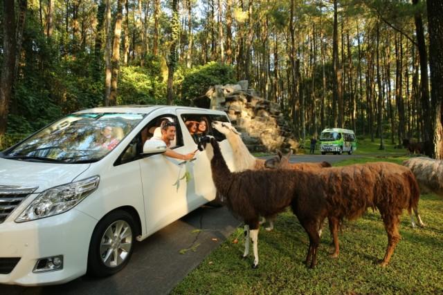 Taman Safari Prigen. Taman Safari Terluas di Indonesia