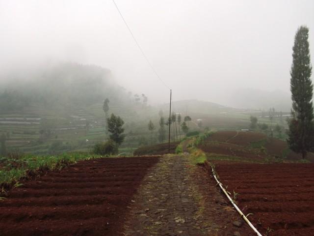 Foto: http://www.kaskus.co.id/thread/54741945a3cb17f6268b4582/catper-ber-8-kami-menggapai-puncak-gunung-prau-via-dieng-wetan---kalilembu/