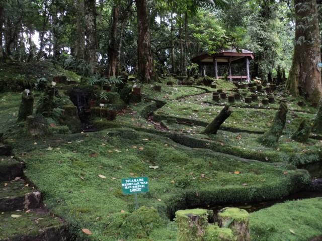 Taman Lumut Kebun Raya Cibodas. Foto: http://www.kaskus.co.id/thread/000000000000000014379190/kebun-raya-cibodas--taman-lumut/