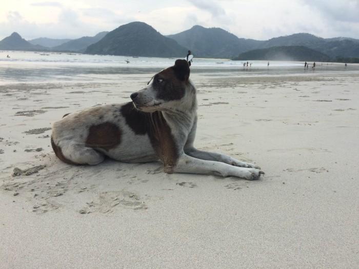 4 Tips Berkunjung ke Pantai Selong Belanak di Lombok