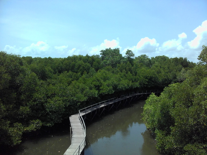 mangrove-bali-2